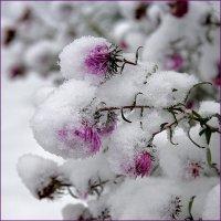 Тяжёлый снег :: Влад Чуев
