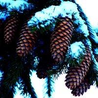 Новогоднее дерево в шишках :: Татьяна Грабежева