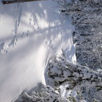 лес полон звериных следов :: Ларико Ильющенко