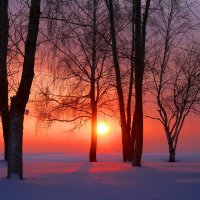 Морозно :: владимир тимошенко