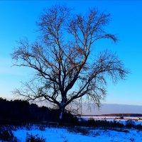 Дерево :: Татьяна Грабежева