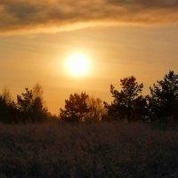 Солнце, деревья, мечта :: Татьяна Грабежева