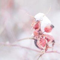 Розово в белом :: Александр Мац
