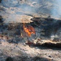 Пожар в лесу :: Алексей Трухин