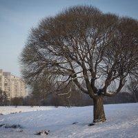 Зима в городе 2 :: VL