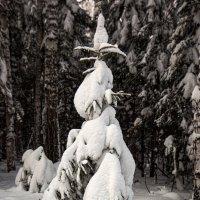 в снегах :: Евгений Тарасов