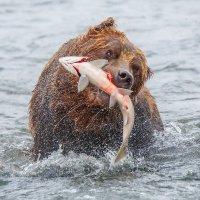 Рыбалка удалась!!! :: Денис Будьков