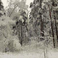 Снежная зима :: Геннадий Худолеев
