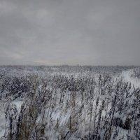 Заснежено :: Владимир Филимонов