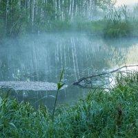 Утро на болоте. :: Алексей Трухин