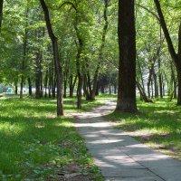 Тени парка спасение в знойный сибирский день! :: Михаил Соколов