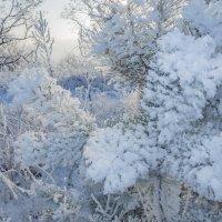 Морозным днем... :: Наталья Меркулова