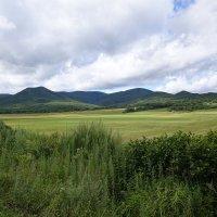 Красивое поле в северо-восточной части Приморского края. :: Алексей Спиченко