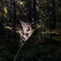 Одноразовая маска для входа в лес :: Игорь Викторов