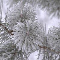 Красота...зимы... :: Сергей Клапишевский