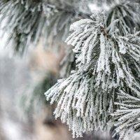 Радости зимы... :: Виктор Садырин