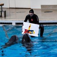 Дельфины :: Edita Rimkute