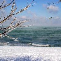 Зима в Крыму. :: Анна Пугач