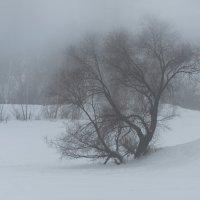 Туман. :: Владимир Безбородов