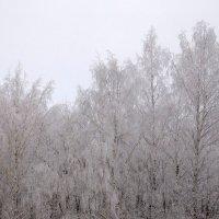 Деревья в инее :: Оливер Куин