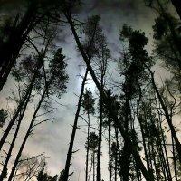 Совиная ночь :: Юрий Воронов
