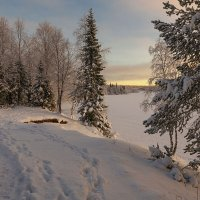 Зимними тропами  5 :: Владимир Чикота