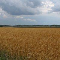 Август :: tamara kremleva