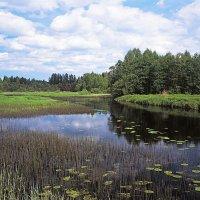 Майский день на реке Волкота :: Сергей Курников