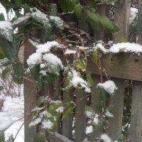 Снежок :: Наталья