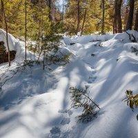 Зимний день в лесу. :: Slava Sh