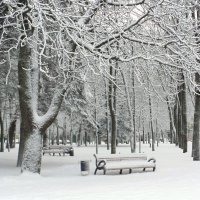 В зимнем парке :: MarinaKiseleva