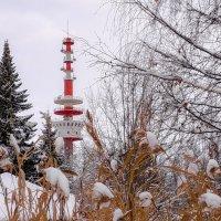 Зима в Петергофе :: Роман Алексеев