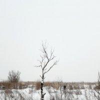 Пейзаж с одиноким деревом :: Екатерина К.