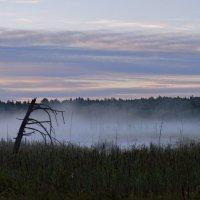 Туман. :: Валерий Пославский