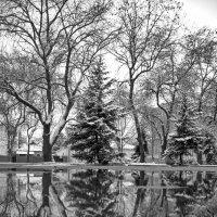 Зима2021 :: Александр Довгий