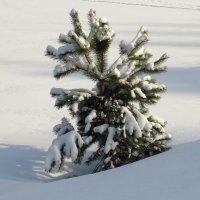 Малышка в снегу :: Андрей Снегерёв