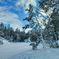Прогулка в скандинавском лесу :: Alm Lana