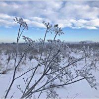 Зимний этюд. :: Валерия Комова