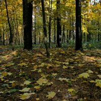 Ковёр из желтых листьев. :: Маргарита ( Марта ) Дрожжина