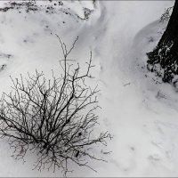 Зима :: Юрий Васильев
