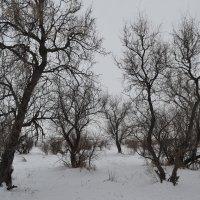 Снег и джигида... :: Георгиевич