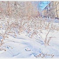 Зимние картинки :: Любовь Чунарёва