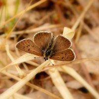а теперь опять про бабочек 65 :: Александр Прокудин