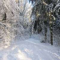 В глуби леса :: Galina M.