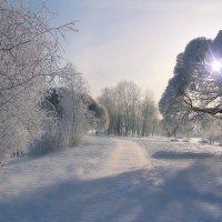 Морозный февраль :: Marina Pavlova