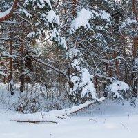 Снежный пейзаж :: Александр Синдерёв