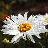 Солнце в белой юбке :: Elena Wise