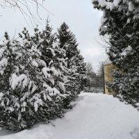 Зимний садик :: veera (veerra)