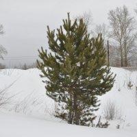Сибирские  пейзажи :: Борис