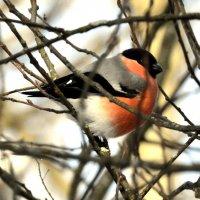 Птицы на дереве - 2 :: Сергей
